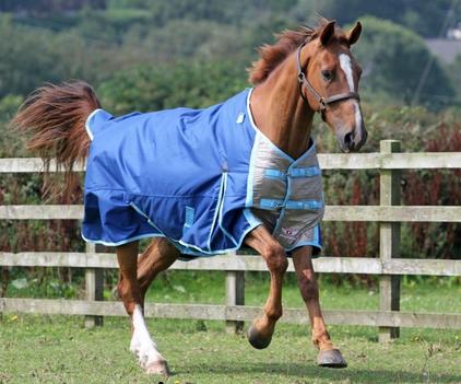 guardian equestrian