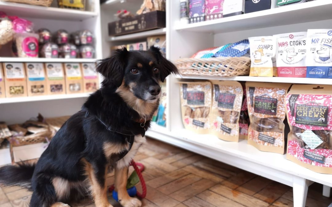 Business able to diversify into dog products because of loan