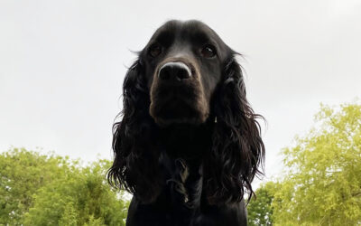 Tail of Success for Canine Business